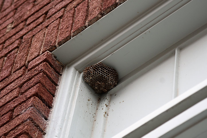 We provide a wasp nest removal service for domestic and commercial properties in Winchester.